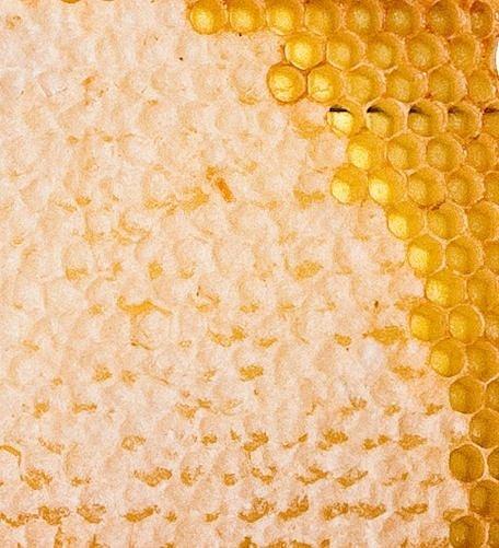 Мед в сотах Разнотравье Башкирский, Алтайский (донник, мальва, эспарцет) (проставлять количество в рамках) в рамке от 1,5 до 2 кг - фото 1