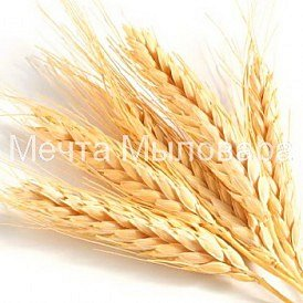 Пшеничных зародышей экстракт СО2, Другие товары каталога - фото 1